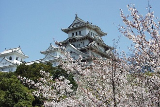 View of Himeji Castle and cherry blossoms in the Kansai region