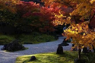 Picture of Showa Kinen Memorial Park, near Akishima, in the fall